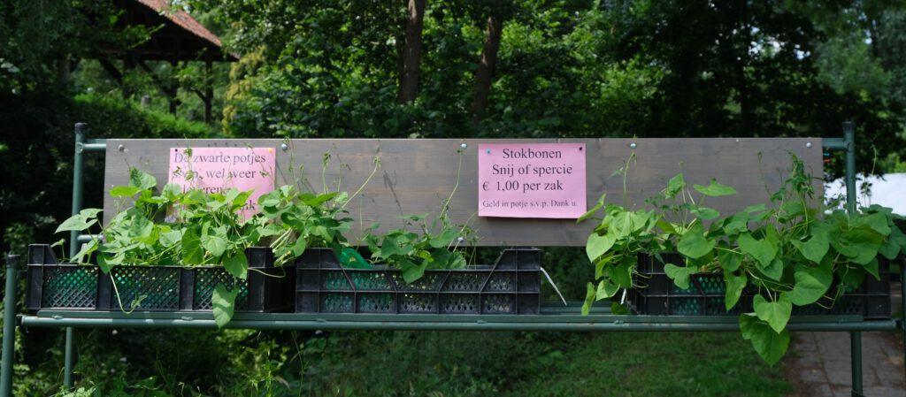 Plantjes te koop © Marleen Michels