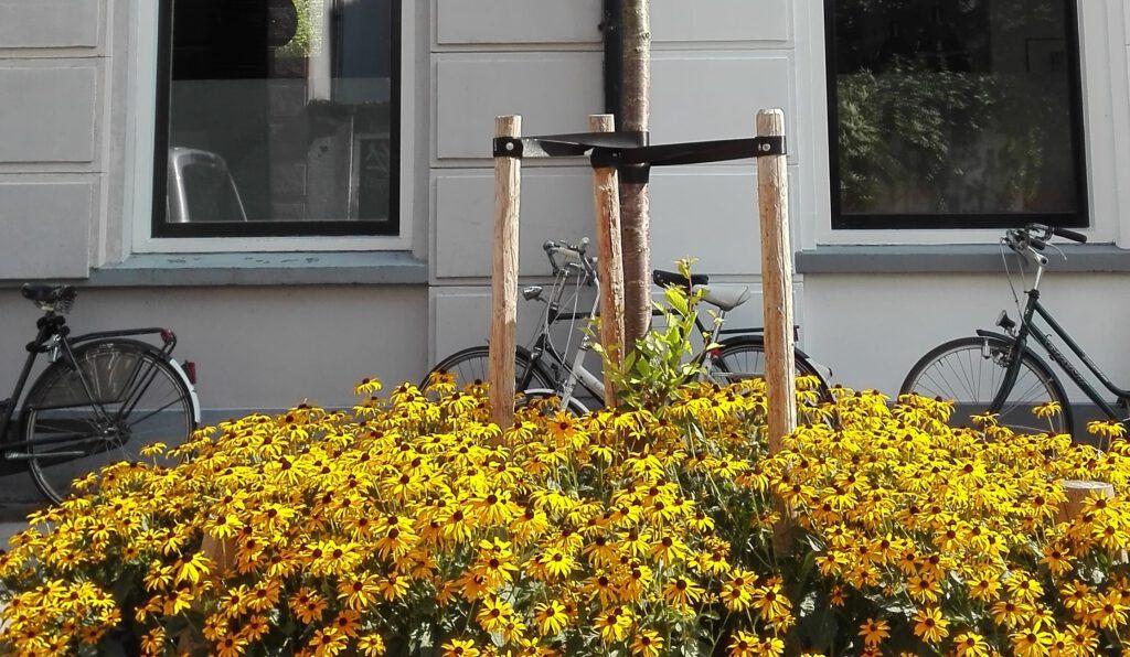 Een boomspiegel adopteren draagt bij aan een groener straatbeeld