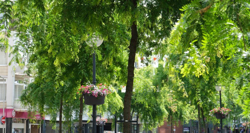 Bomen in de Looierstraat © Marleen Michels