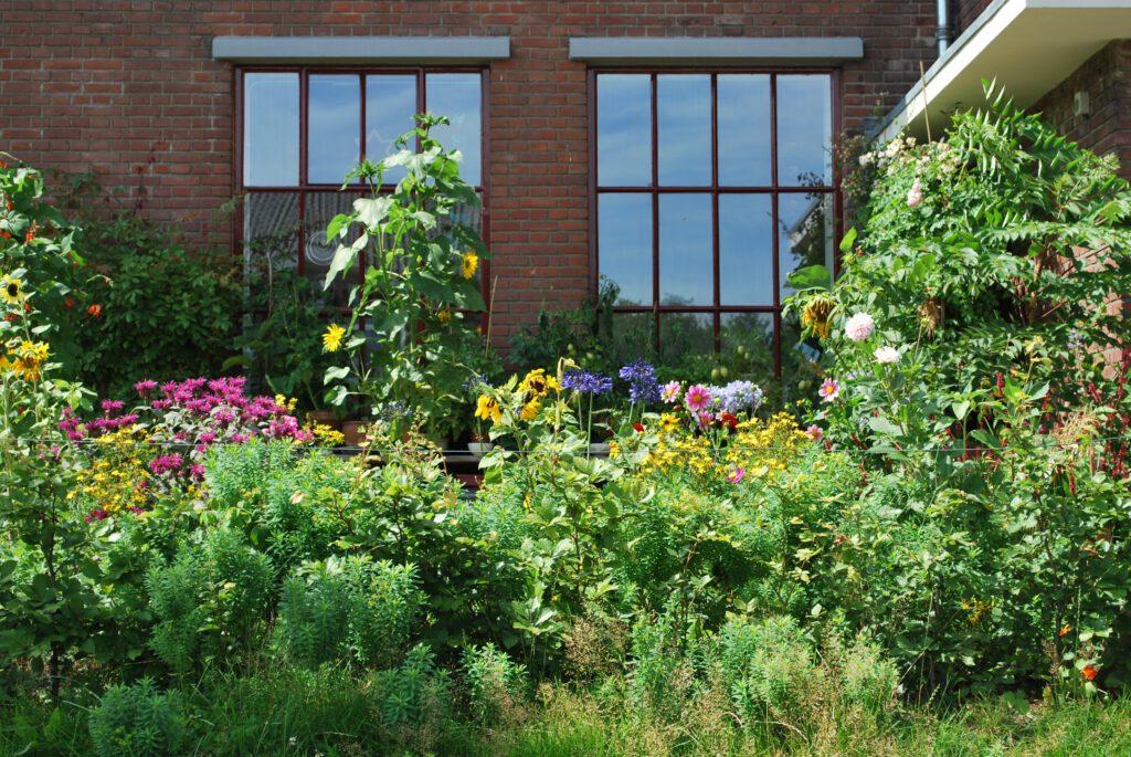 Een groene tuin is klimaatadaptief en goed voor de biodiversiteit