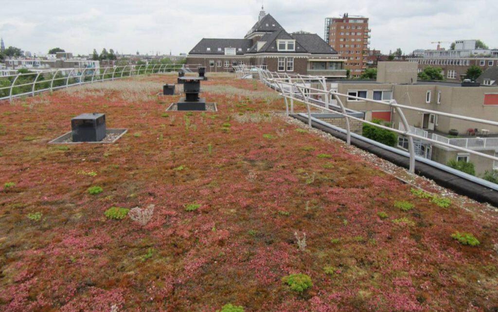 Groen dak op complex van ©Stadgenoot
