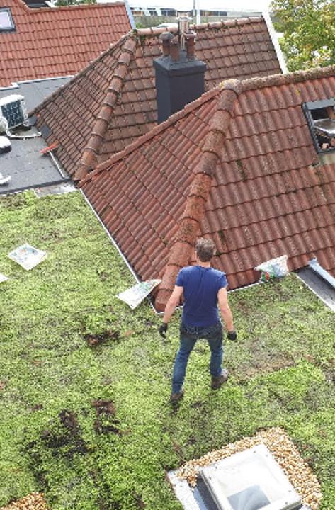 Groene daken dag Burgemeesterswijk