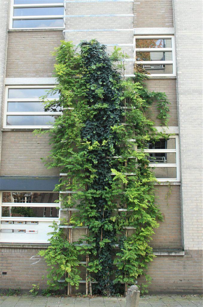In de Spijkerstraat zijn rekken voor klimmend groen bevestigd