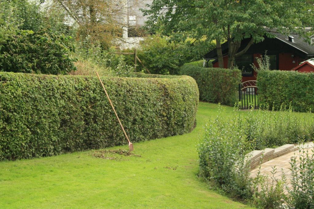 Een groene heg zorgt voor verkoeling, wateropvang én trekt vogels en insecten aan