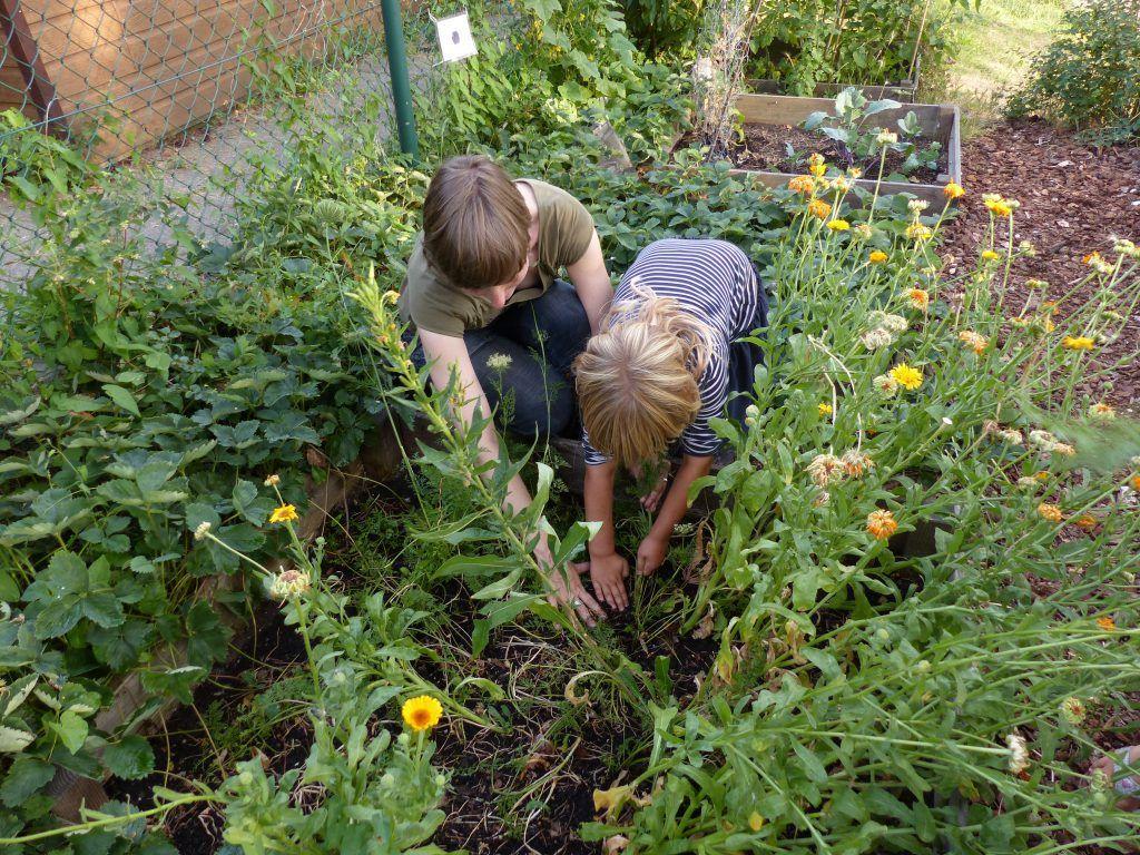 Kinderen werken mee bij het Groente Gilde