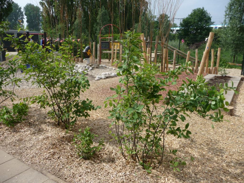 Een groen schoolplein is goed voor de biodiversiteit