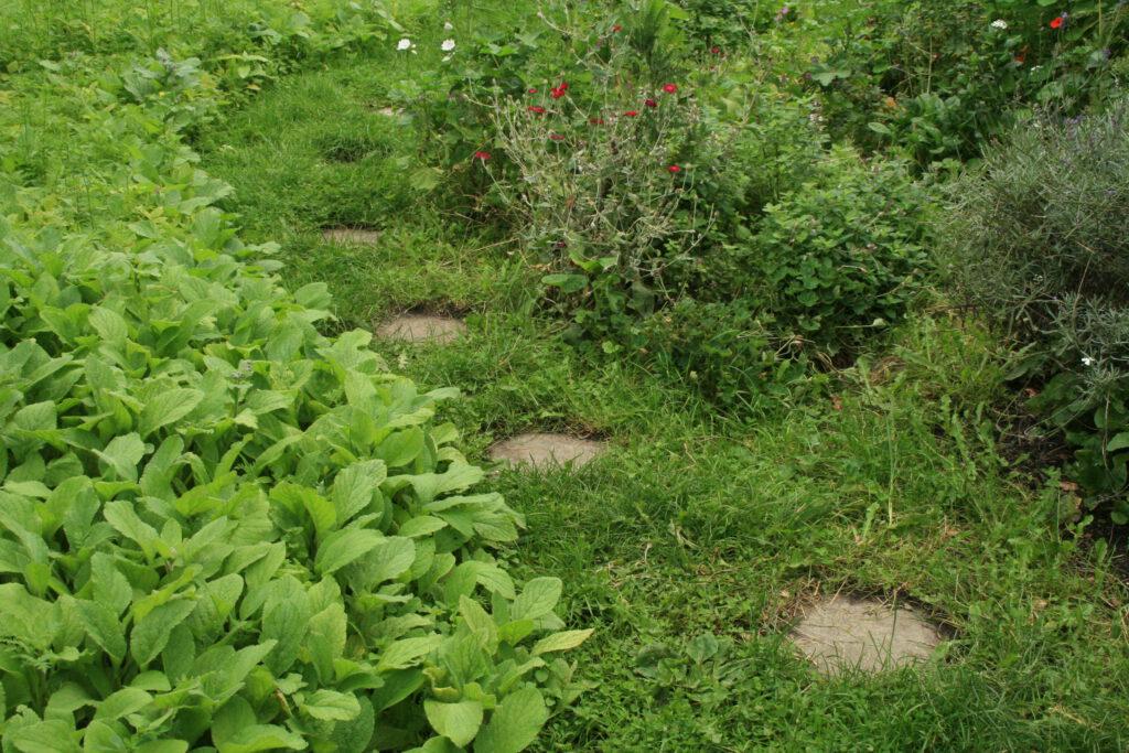 Stapstenen in gras zorgen ervoor dat het water goed weg kan lopen