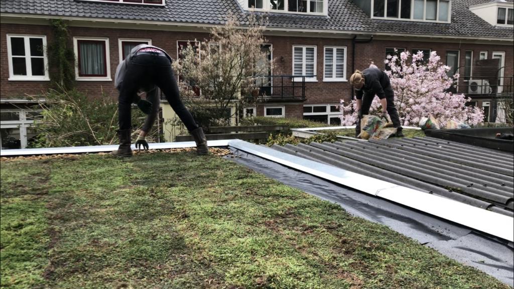 Groen dak aanleggen