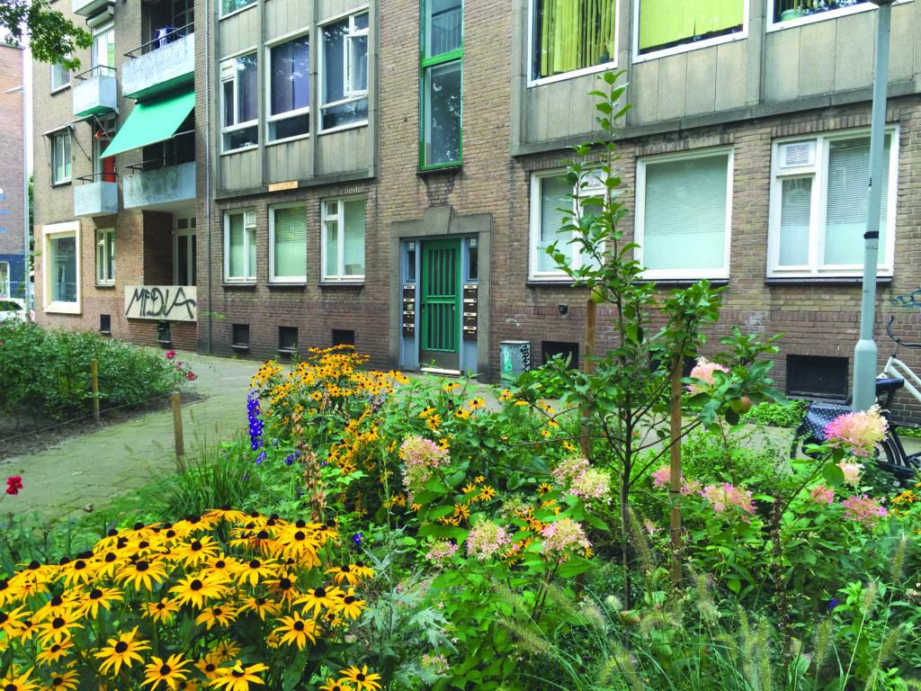 Gemeenschappelijk groen in de Rodenburgstraat is mooi en klimaatbestendig