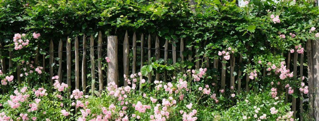 Groene tuin in Klingelbeek