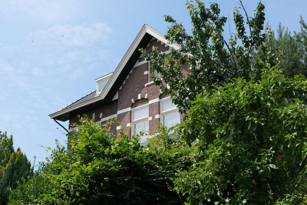 Boom in de tuin Arnhem