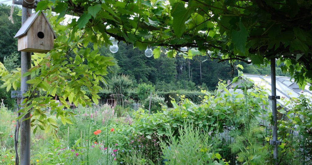 Pergola met druivelaar boven het terras © Marleen Michels