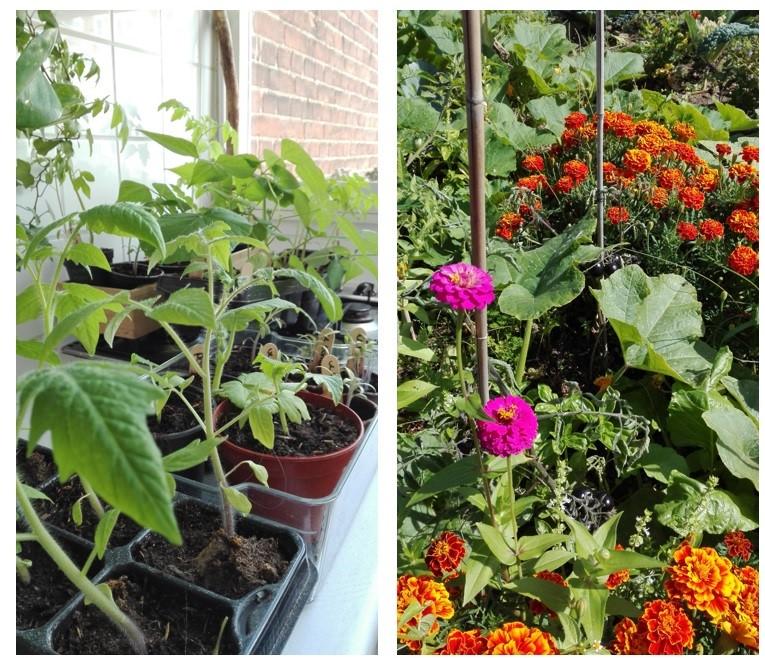 Planten voor een na ijsheiligen