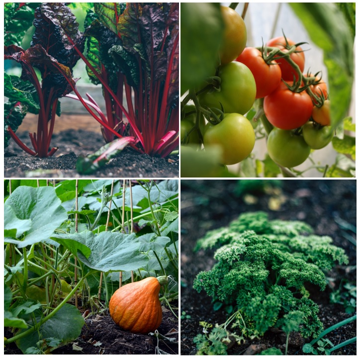 Er zijn verschillende soorten groente die gemakkelijk te telen zijn