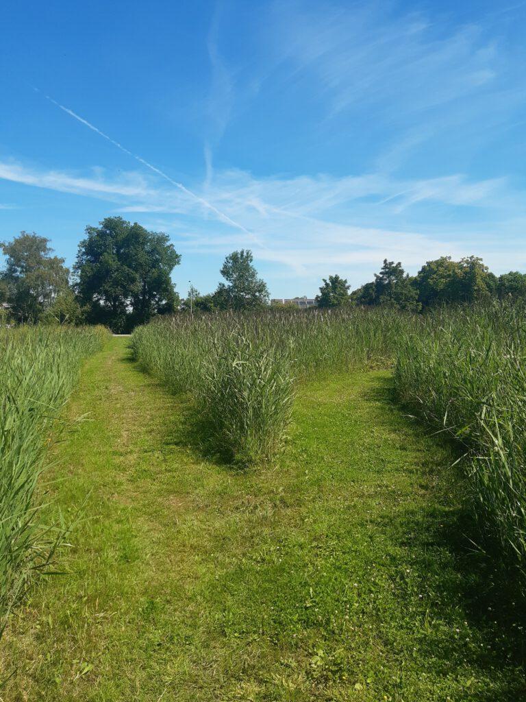 Natuurpaden Arnhem-Zuid © Henry Oost