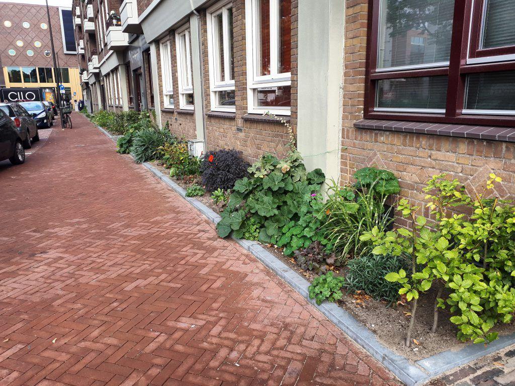 De geveltuinen in de Rodenburgstraat zijn mooi en zorgen voor verkoeling en regenwateropslag