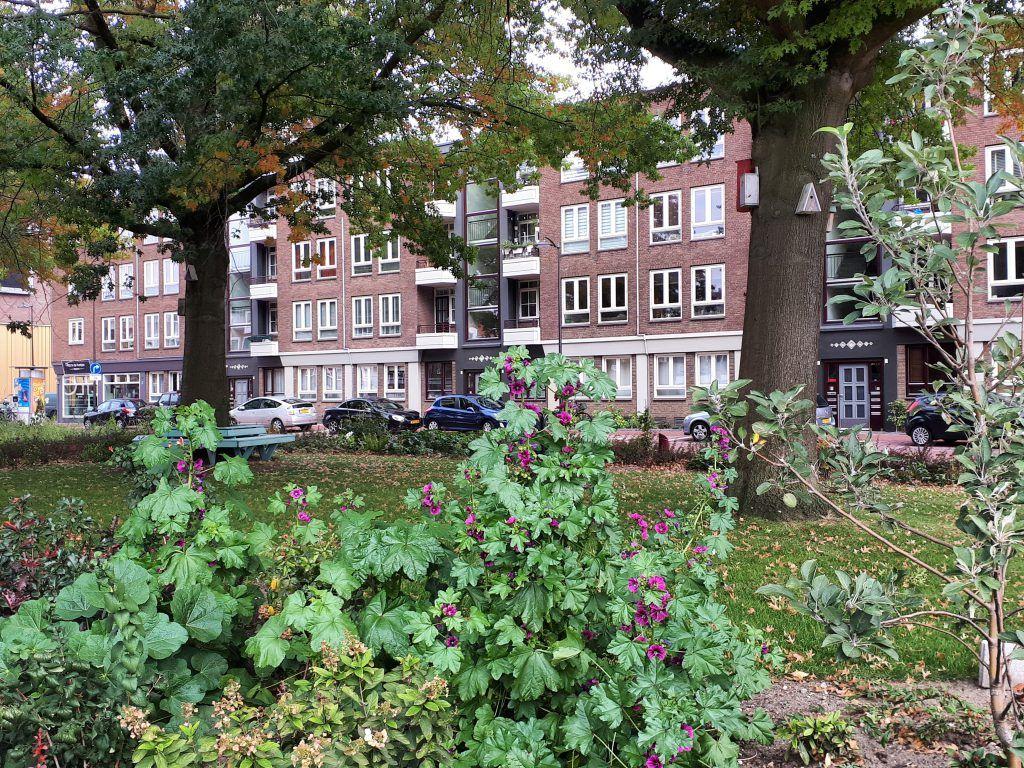 De buurttuin in de Rodenburgstraat is een mooie en klimaatbestendige plek geworden
