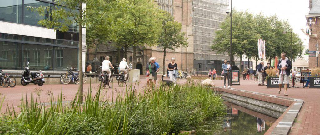 Er zijn veel waterminnende planten in de Sint Jansbeek aangeplant