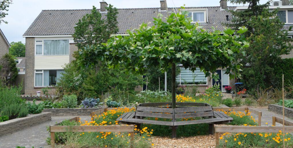 Buurtmoestuin Vredenburg: bewoners hebben stoeptegels verwijderd en vervangen door groen en moestuinbakken © Marleen Michels
